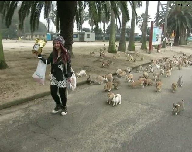 日本大久野岛兔群追赶游客讨食